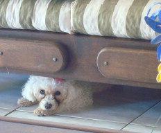 Se o cãozinho escolher algum lugar seguro, respeite a opção-Natasha Valenti/Arquivo Pessoal