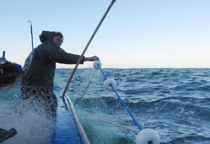 Resultado de imagem para Pesca com rede anilhada