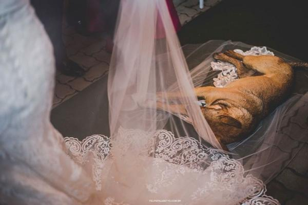Cachorrinho achou um abrigo da chuva no véu da noiva