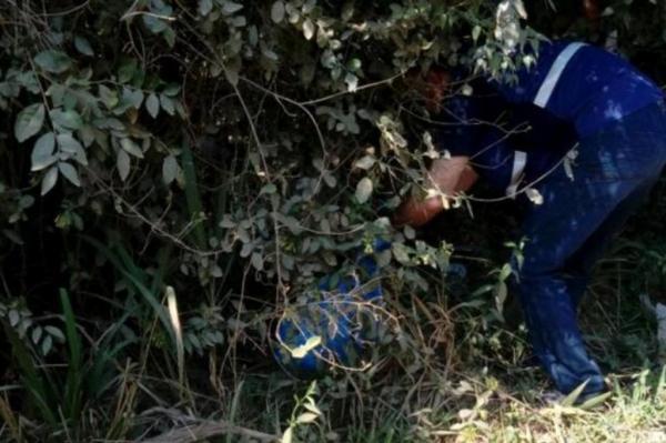 Ossadas foram encontradas dentro de sacos plásticos e caixas de papelão