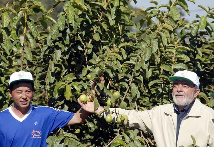 Resultado de imagem para Lula no meio da plantação