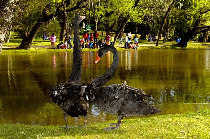 fotos jardim botanico porto alegre : fotos jardim botanico porto alegre:Jardim Botânico conta com 110 espécies de aves – Jefferson Botega