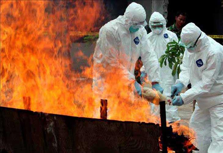 Lá vem... Holanda sacrifica mais de 42.000 aves após detectar vírus H5N1